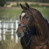 Venice Bridle - Black